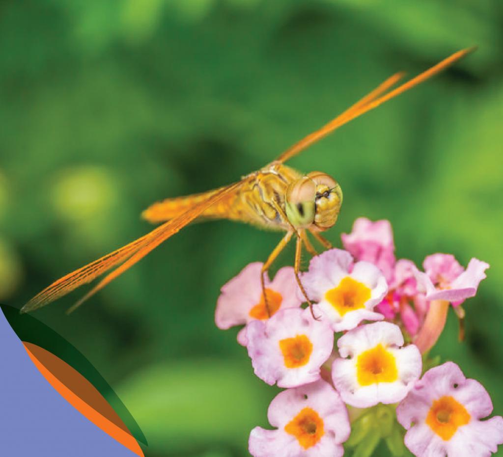 orange-dragonfly-01